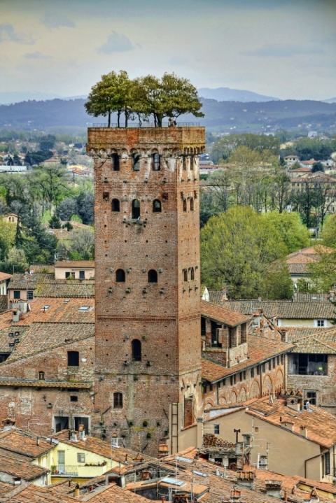 Torre Guinigi, Lucca, Italia architecture building village roof garden g green brick tower italy italien photography travel holiday