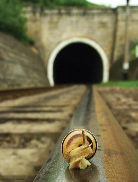 snail schnecke train tracks way slow as a snail photograph photography