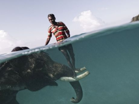 elephant under water man standing on ivory horns diving photography swimming photograph image