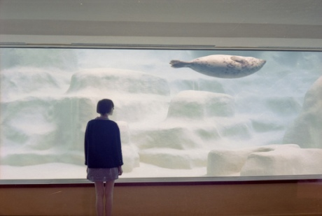 aquarium zoo photography sea lion sea cow watch watching glass under water photograph photo