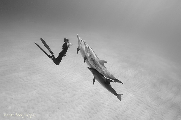 black and white photography animal wildlife under water ocean sea animal dolphin dance diver