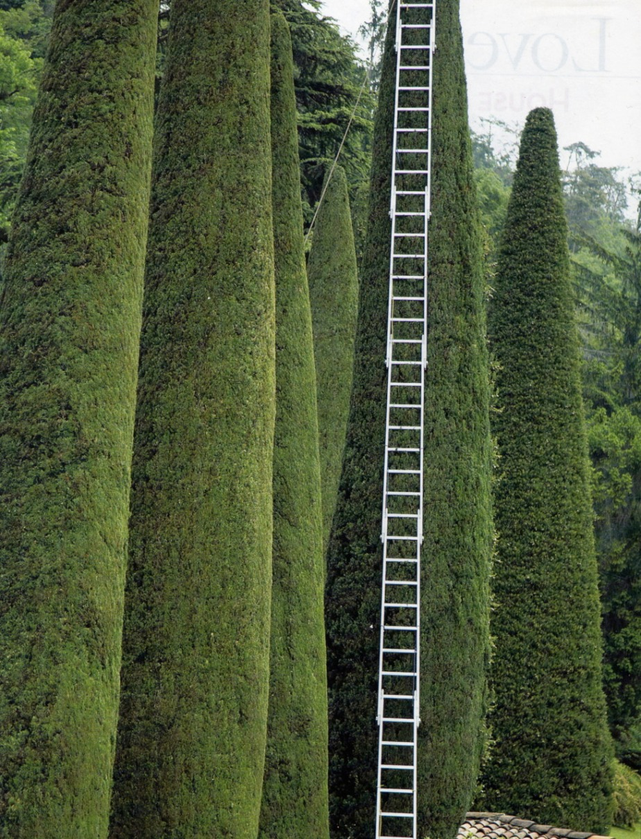 garden ladder, design, photo, photography, garden, outdoors, landscape, green, trees