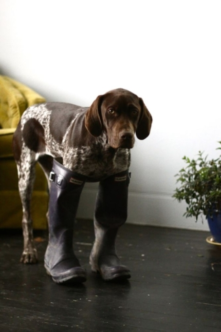 dog rain boots cute funny puppy photography photo image hund stiefel