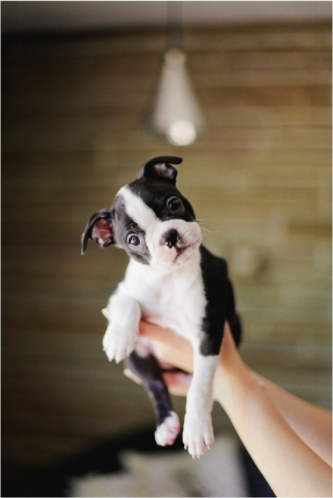 cute dog puppy doggy photograph tumblr photography wordpress blog holding a young small dog in hands