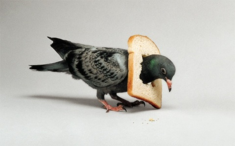 pigeon bird art sculpture bread pigeon eating bread toast photography artistic artist creative design blog wordpress tumblr
