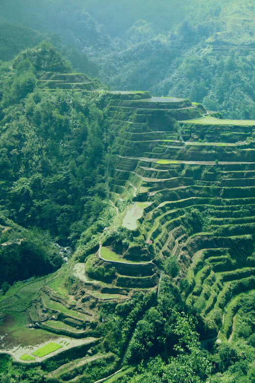 """banaue rice terraces philipines landscape mountain photography nature green The Banaue Rice Terraces (Tagalog: Hagdan-hagdang Palayan ng Banawe) also called Payaw, are 2000-year old terraces that were carved into the mountains of Ifugao in the Philippines by ancestors of the indigenous people. The Rice Terraces are commonly referred to by Filipinos as the """"Eighth Wonder of the World"""". It is commonly thought that the terraces were built with minimal equipment, largely by hand. The terraces are located approximately 1500 meters (5000 ft) above sea level and cover 10,360 square kilometers (about 4000 square miles) of mountainside. They are fed by an ancient irrigation system from the rainforests above the terraces. It is said that if the steps are put end to end it would encircle half the globe.  Locals to this day still plant rice and vegetables on the terraces, although more and more younger Ifugaos do not find farming appealing, often opting for the more lucrative hospitality industry generated by the Rice Terraces[citation needed]. The result is the gradual erosion of the characteristic """"steps"""", which need constant reconstruction and care. In 2010 a further problem was drought, with the terraces drying up completely in March of that year. UNESCO world wonder heritage culture"""