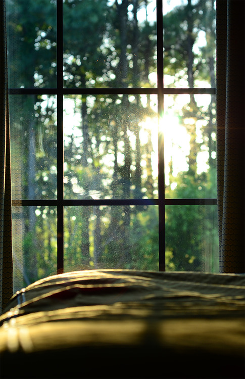 Sunxx shining through the trees and window weekend in bed with view into forest tree landscape photography interior design beautiful bed light window artistic calm relaxed cute cabin in woods