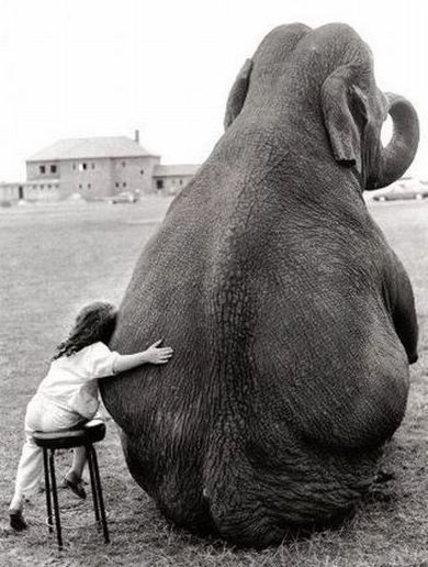 elephant cute child hugging an elefant true friendship love romance black and white photograph