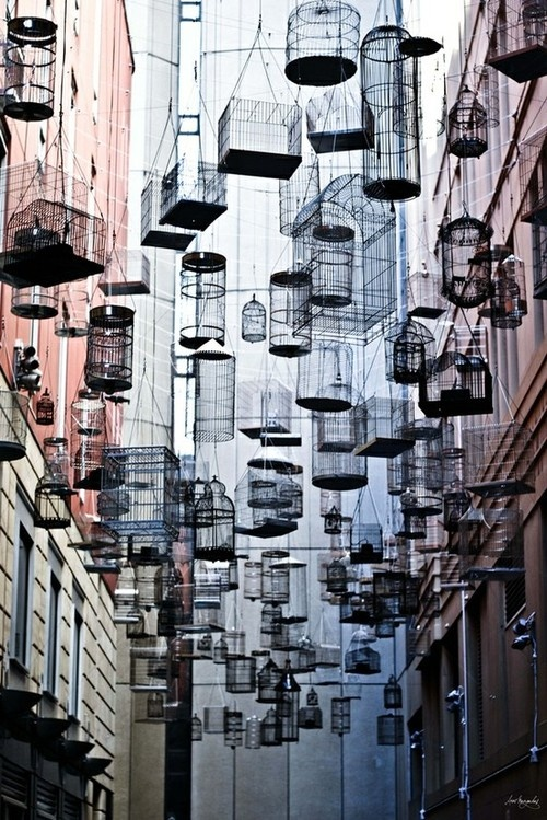 bird cages wired cages hanging ceiling installation magical urban void photography art architecture photo surrealArtist Michael Thomas Hill created Forgotten Songs, an installation of 110 empty birdcages suspended high in the air that play the songs of fifty birds that once lived in central Sydney before the colonization and urbanization of the area