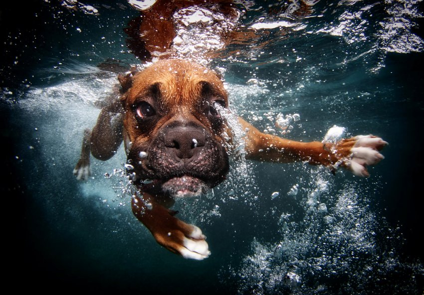 Casteel, 31, is the photographer behind a quirky collection of images of dogs caught in the act of diving, swimming, splashing and generally goofing off in the water. What makes the photos different from anything you've seen before is Casteel's perspective: below the surface, with the dogs lunging toward the camera in pursuit of a toy.