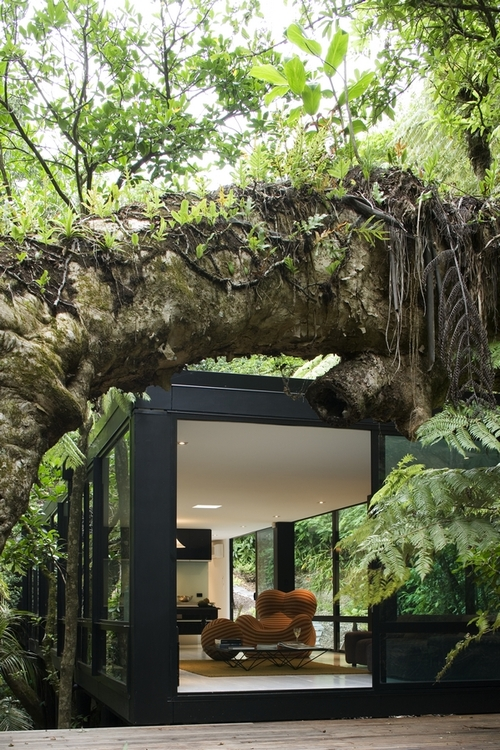 tree house cabin forest Kaori trees architecture wood timber children playing modern flat in woods living in forest organic sustainable architecture photography blog best wordpress tumblr organic furniture jungle life tate new zealand glass house