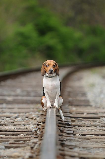doggy dog on railtracks cute dog on rail line train tracks waiting sitting animal photography