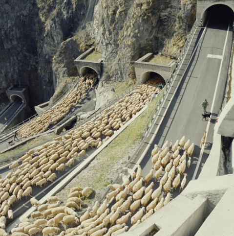 San Baldo Pass italian sheperd sheep herd flock mountains italy route pass tunnel alps farmer pastore north italy