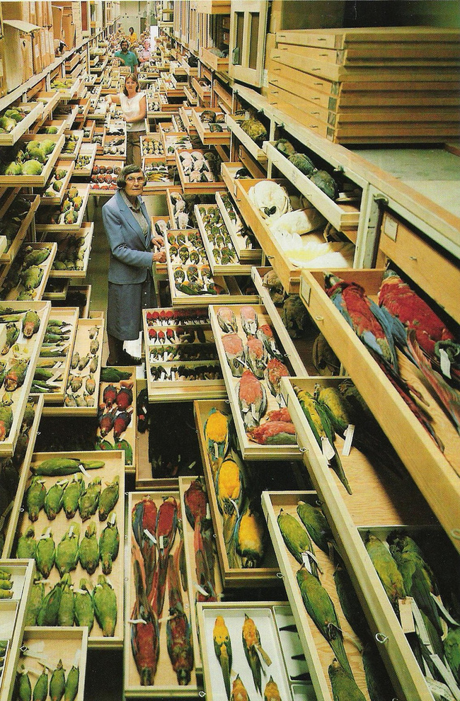 smithsonian bird collection natural history national museum science animals wildlife archive photography vintage photographer shelving shelfs