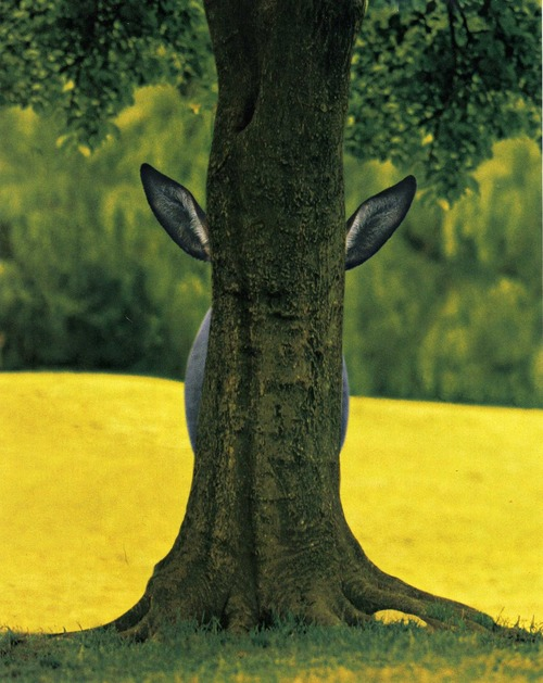 we hide hiding funny animal cute picture hiding behind a treek hide and seek photography field landscape farm forest