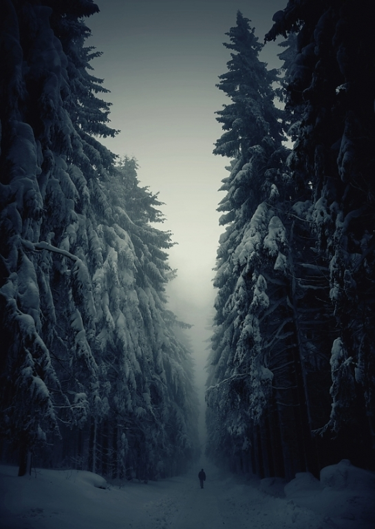 winter forest snow walking walkinger covered trees alps christmas holiday fog night dark lonely landscape nature photography