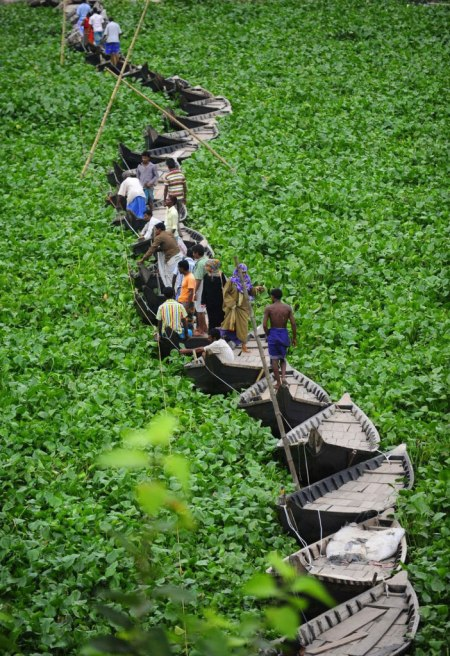 amazing photography wildlife award national geographic bangladesh bridge boats floating river plants green nature landscape natural