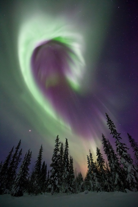 Aurora Borealis in Swedish Lapland, popular, physical phenomenon, arctic poles, snow, aurora, light particles, electrons, atmosphere, north pole, Sweden, Norway, Scandinavia, colourful