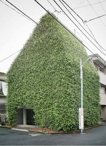 green facade plant architecture house vertical green sustainable urban green roof farm ivyy facade leaves