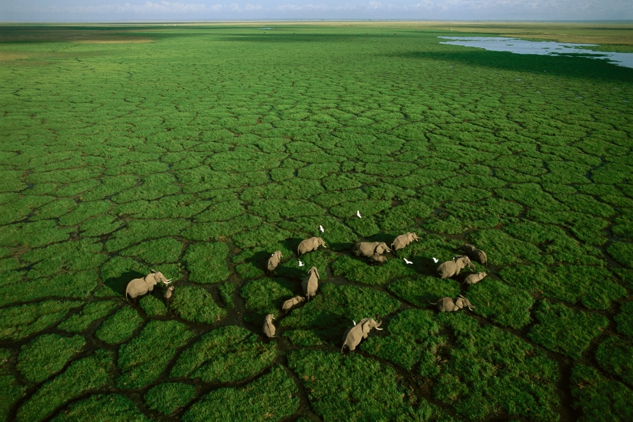 Elephants grazing in Lake Amboseli, Amboseli National Park, Kenya / photographed by George Steinmetz, National Geographic aerial photography amazing great stunnign view planet earth africa landscape nature panoram