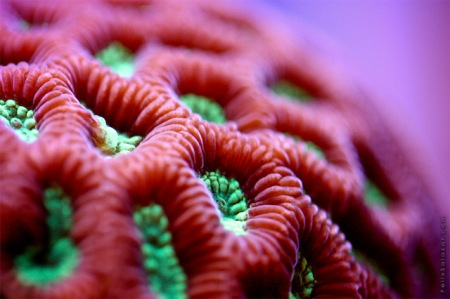 coral reef aquarium fish underwater ocean color macro photography lense zoom detail amazing vibrant creatures