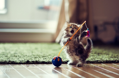 cute fluffy cat kitten string playing adorable pet animal fun