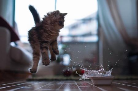 cute fluffy cat kitten string playing adorable pet animal fun