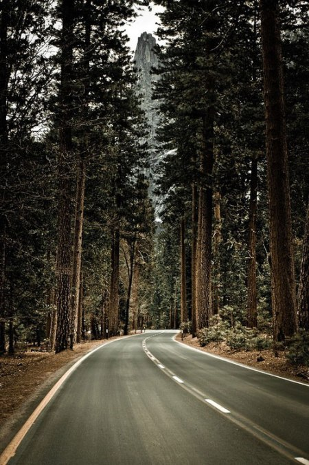 forest road landscape nature yosemite national park california forest landscape road highway trip hiking nature wilderness photography