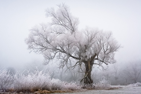 frost winter landscape photography white beauty snow freezing temperatures climate trees forest calm silent