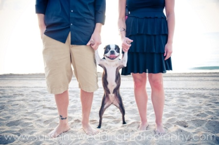 funny dog photo wedding photography photo dog sand beach cute