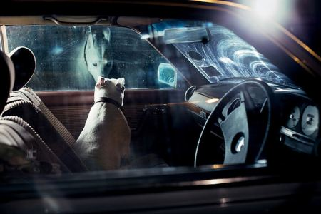 dog portrait photography cars silence abondoned dogs documentary moving sad emotional