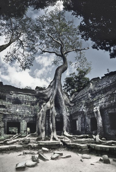 ta prohm temple malaysia phen trees ruin sia South East Asia Cambodia View photos from this member or from everyone Cambodge Kampuchea camboya カンボジア Камбоджа Kambodscha Indochina Angkor Ta Prohm town temple worship religion Siem Reap Buddha Buddhism Tonle Sap UNESCO World Heritage Site ruin ruins rubble tree root roots overgrown grow conquer jungle rain forest tropic tropical thick shrine Hinduism archeology excavation reconstruction École française d'Extrême-Orient Lara Croft Tomb Raider geotagged ancient old mysterious history historic travel spooky moody atmospheric monument