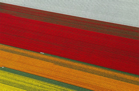 tulip fields flowers netherlands spring aerial photograpny landscape nature blossom bulbs harvest visit tourist tours holland north south travel