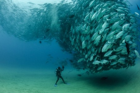 underwater photography david and goliath swarm fish diver diving under water photographer travel oean sea food