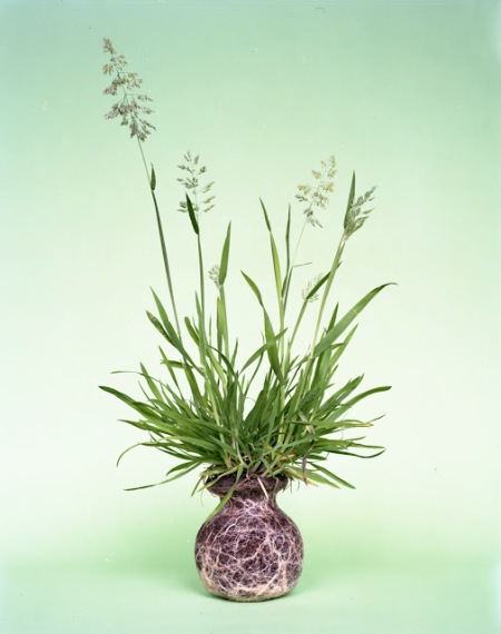 diana scherer fine art photography artist flower plant art roots shaped vessel vases earth soil garden flowers photography