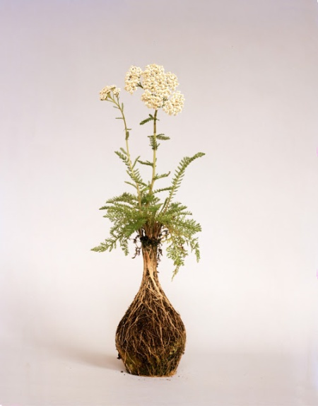 diana scherer fine art photography artist flower plant art roots shaped vessel vases earth soil garden flowers photography