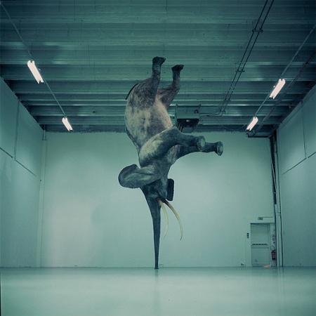 'Nasutamanus' _ Gravity-Defying Elephant Sculptures by French artist Daniel Firman