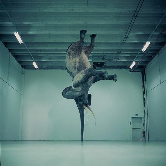 Gravity-Defying Elephant Sculptures by Daniel Firman (1)