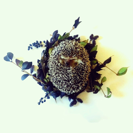 Stella Maria Baer-St. Hegel of the Boxwood, hedgehog little everyday life objects interior photography fun
