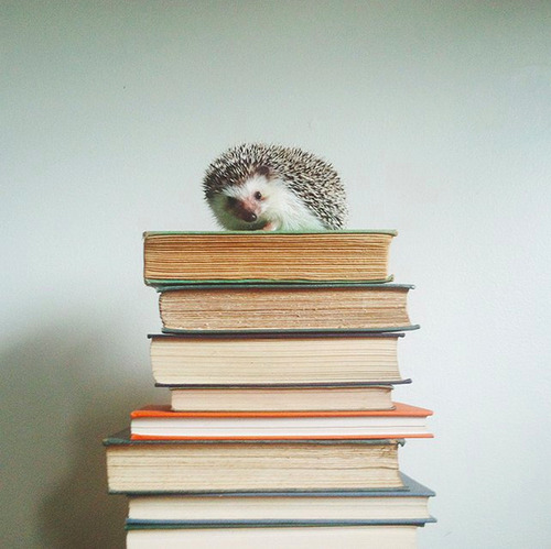 Stella Maria Baer- What I am doing with my philosophy major,, hedgehog animals, books, photography, literature