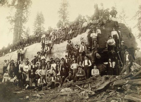 ca. 1900, Yosemite National Park, California, USA --- Cavalry and Fallen Tree