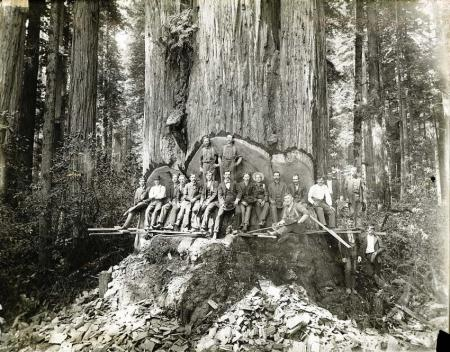 ca. 1900, Yosemite National Park, California, USA --- Cavalry and Fallen Tree timber california