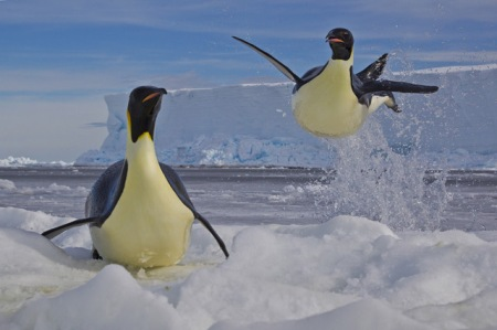 040_Paul-Nicklen-Canada-Frozen-moment / Photo of two adorable penguins called 'Frozen Moment', captured by Paul Nicklen.