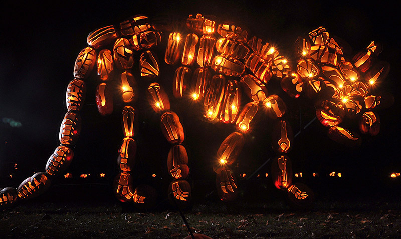 Killer Pumpkin Arrangements at the Great Jack O'Lantern Blaze (1)