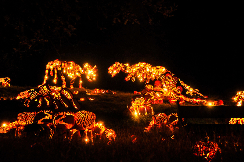 Killer Pumpkin Arrangements at the Great Jack O'Lantern Blaze (8)