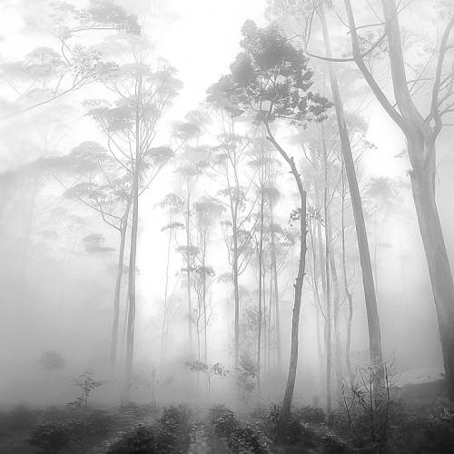 'Silence' photographed by Hengki Koentjoro in Ciwidey, West Java, Indonesia