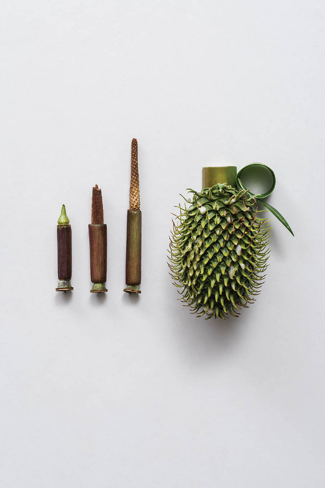Harmless Weapons Made of Plants by Sonia Rentsch (3)