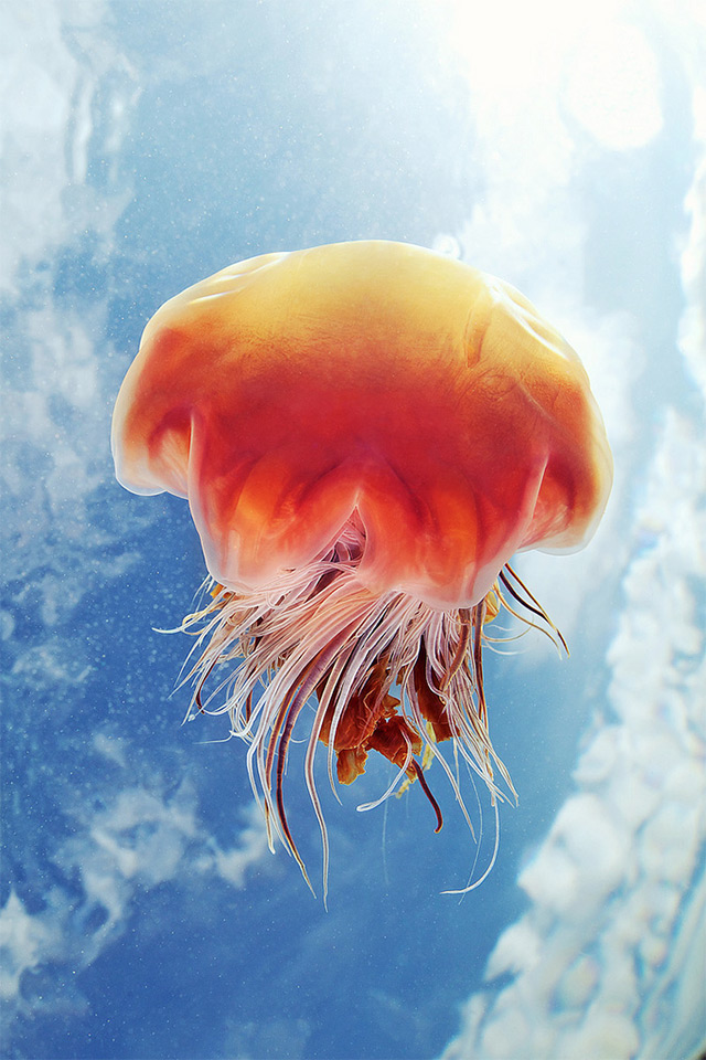 Jellyfish Photographed Against the Sky by Alexander Semenov (1)