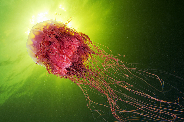 Jellyfish Photographed Against the Sky by Alexander Semenov (2)
