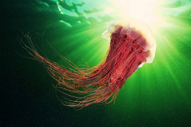 Jellyfish Photographed Against the Sky by Alexander Semenov (4)